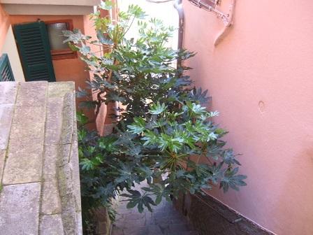 Italie  -  Ligurie, les Cinque Terre - Page 2 Dscf1025