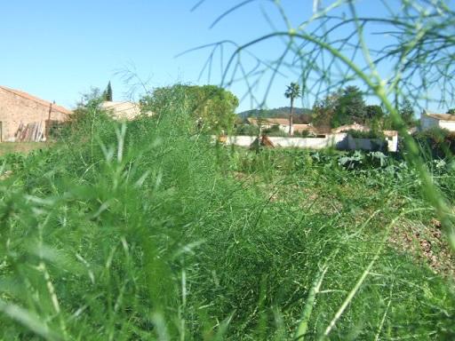 légumes du jardin Dscf7813