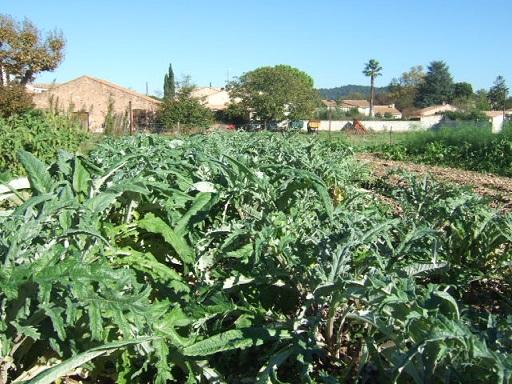 légumes du jardin Dscf7814