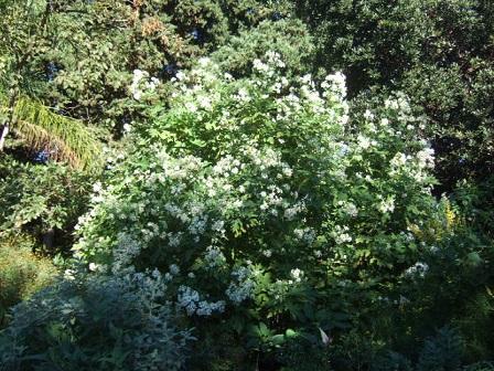 (83) Jardin Olbius Riquier - Hyères Dscf7826