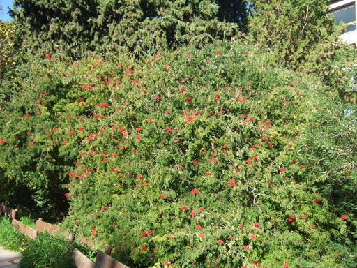 (83) Jardin Olbius Riquier - Hyères Dscf7830