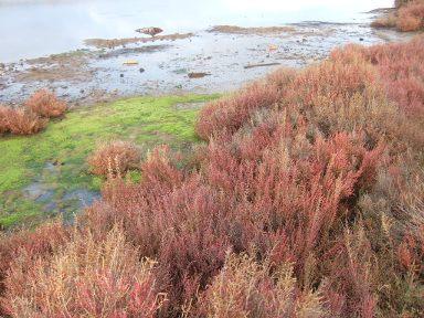 Balade sur le littoral varois Dscf8320