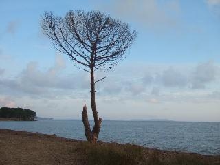 Balade sur le littoral varois Dscf8323