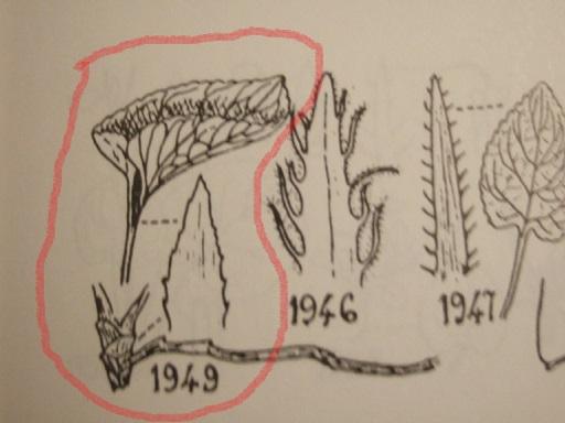 flore des vieux murs, rochers  et rocailles naturelles - Page 4 Dscf8623