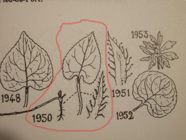 flore des vieux murs, rochers  et rocailles naturelles - Page 4 Dscf8624