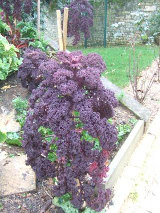 légumes et condiments décoratifs  - Page 3 Dscf8716