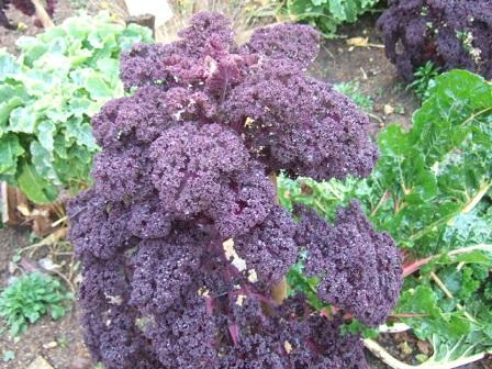 légumes et condiments décoratifs  - Page 3 Dscf8718