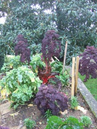 légumes et condiments décoratifs  - Page 3 Dscf8719