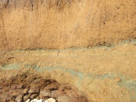 (85) Balade sur le littoral vendéen Dscf8921