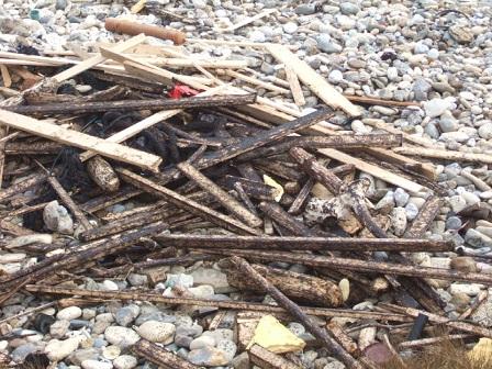 (85) Balade sur le littoral vendéen Dscf9013