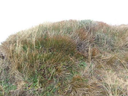 (85) Balade sur le littoral vendéen Dscf9023