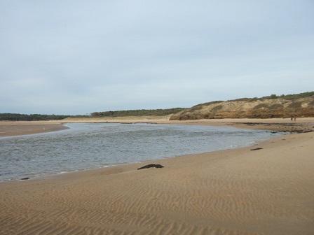 (85) Balade sur le littoral vendéen Dscf9122