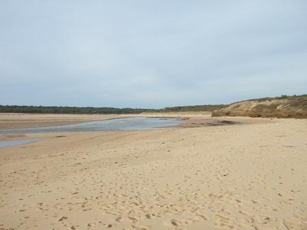 (85) Balade sur le littoral vendéen Dscf9123