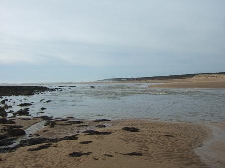 (85) Balade sur le littoral vendéen Dscf9124