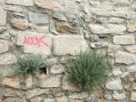 flore des vieux murs, rochers  et rocailles naturelles - Page 4 Dscf9714