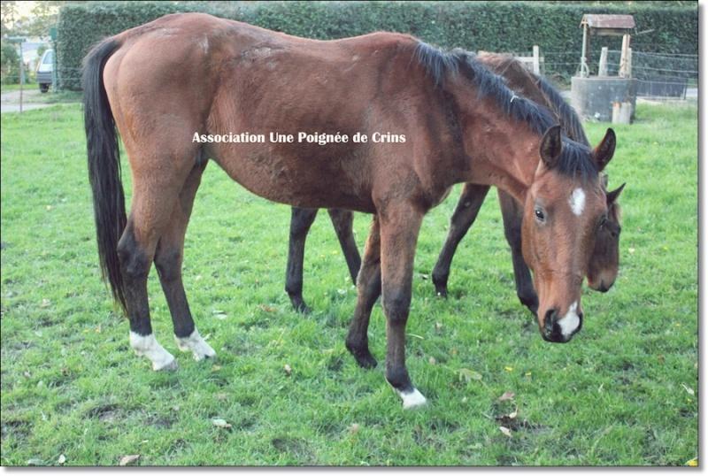 Beldo du Coudray - Né en 2011 - TF (PP ?) - 76 - Délai : NOEL ! Img_9610