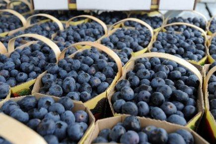 Les superfruits: bien les choisir pour bénéficier de leurs propriétés  10339610