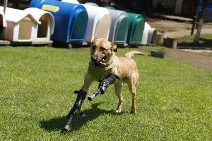 20 animaux handicapés retrouvent leur joie de vivre grâce à des prothèses conçues sur mesure  20-ani15