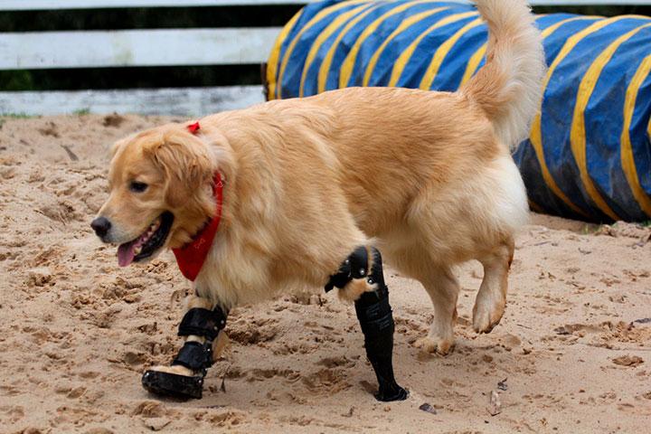 20 animaux handicapés retrouvent leur joie de vivre grâce à des prothèses conçues sur mesure  20-ani20