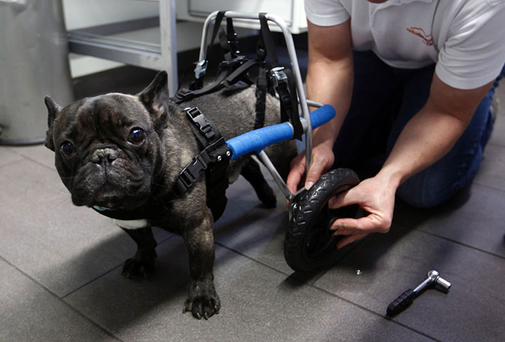 20 animaux handicapés retrouvent leur joie de vivre grâce à des prothèses conçues sur mesure  20-ani22