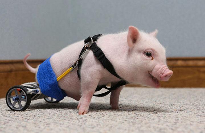 20 animaux handicapés retrouvent leur joie de vivre grâce à des prothèses conçues sur mesure  20-ani23