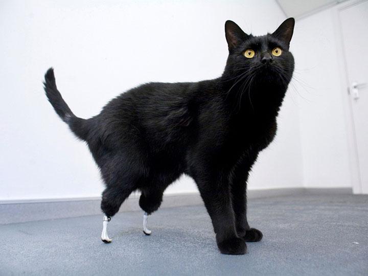 20 animaux handicapés retrouvent leur joie de vivre grâce à des prothèses conçues sur mesure  20-ani24