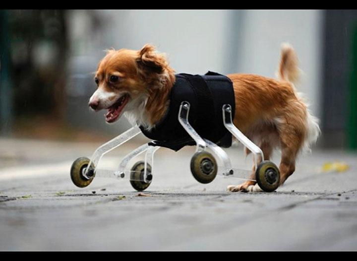 20 animaux handicapés retrouvent leur joie de vivre grâce à des prothèses conçues sur mesure  20-ani25