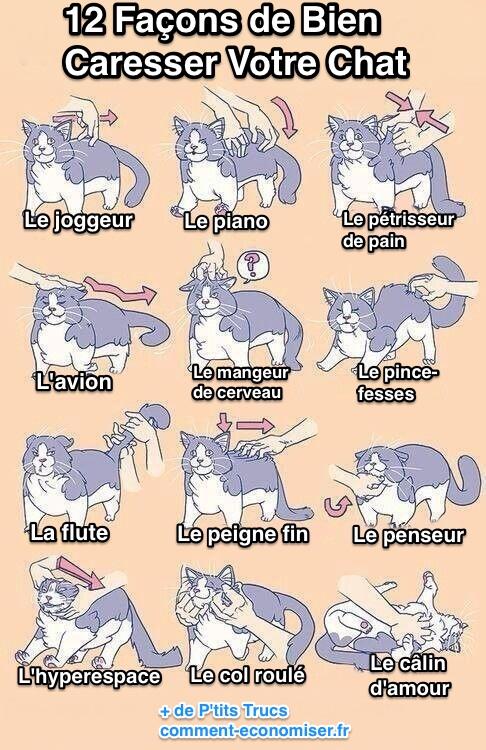 Dix façons pour bien caresser votre chat Chat2_10