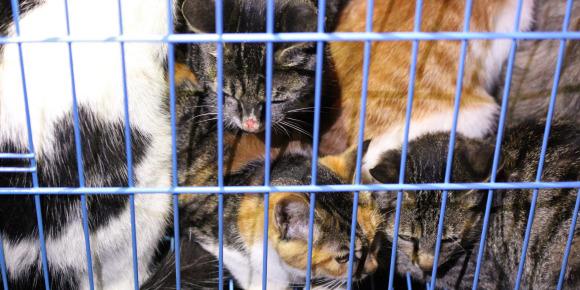 Chine: les autorités relâchent 1.000 chats dans une forêt  Chats10