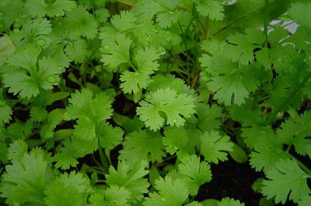 5 plantes qui adorent pousser en intérieur Corian10