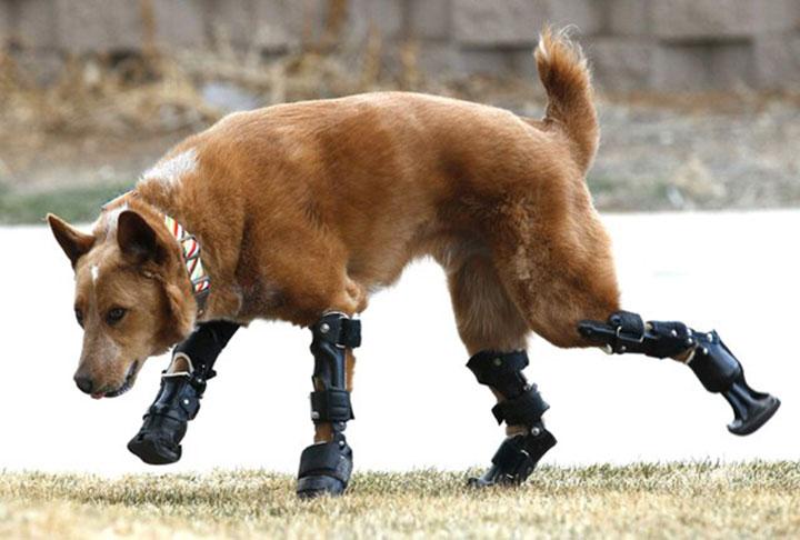 20 animaux handicapés retrouvent leur joie de vivre grâce à des prothèses conçues sur mesure  Handic10