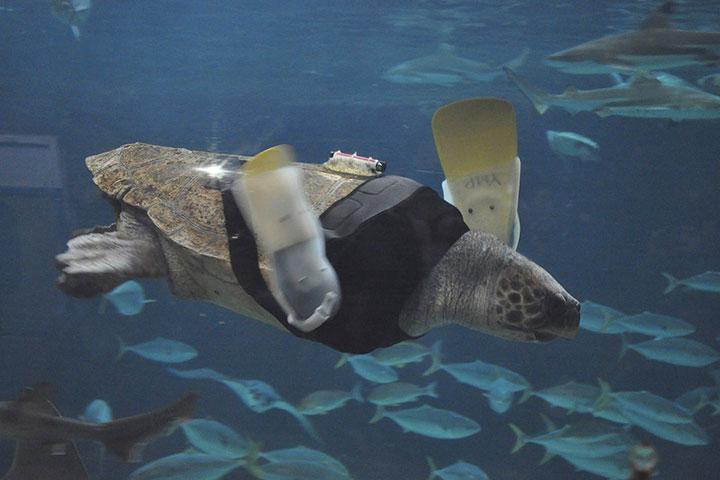 20 animaux handicapés retrouvent leur joie de vivre grâce à des prothèses conçues sur mesure  Handic12