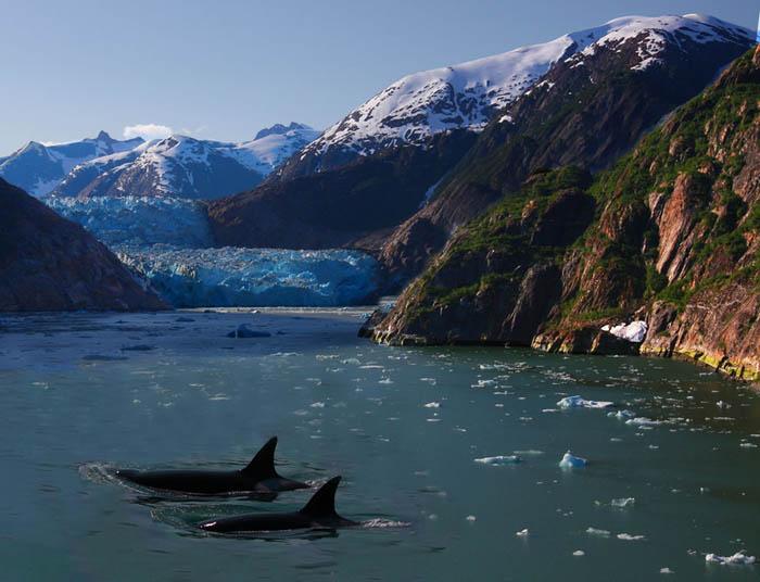 Majesté des Icebergs Iceber11
