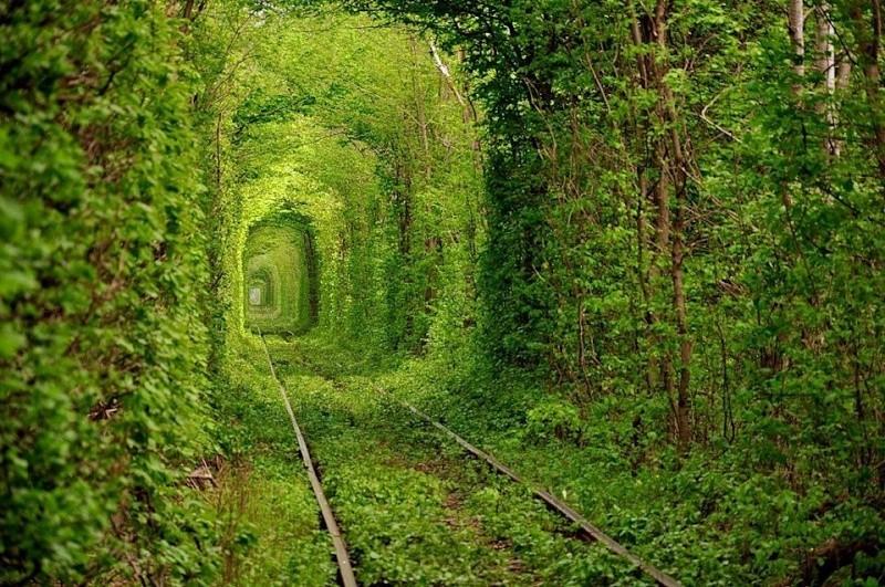 Le Tunnel de l'Amour de Kleven (Ukraine) Le-tun11