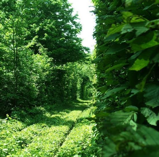 Le Tunnel de l'Amour de Kleven (Ukraine) Le-tun13