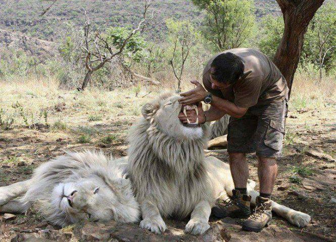 Drôles de couples Lion-e10
