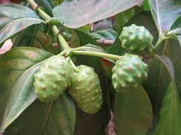 Les superfruits: bien les choisir pour bénéficier de leurs propriétés  Noni10