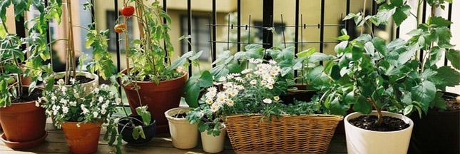 5 plantes qui adorent pousser en intérieur Plante10
