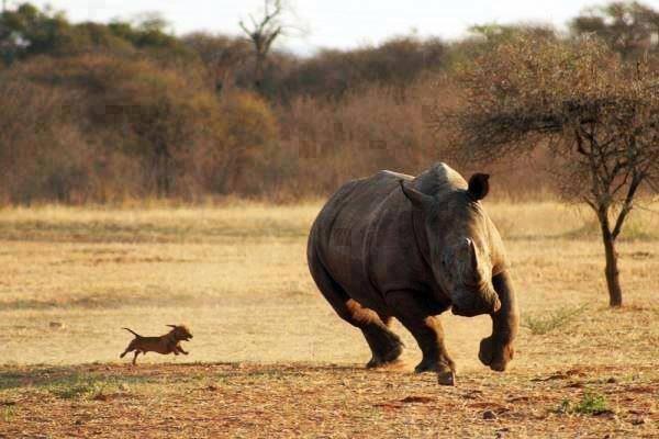 Drôles de couples Rhino-10