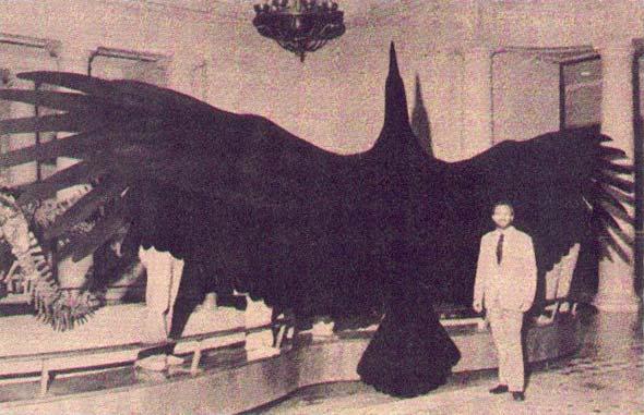 Le 'Thunderbird': monstre des cieux, légende?  Thunde10