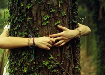 La sylvothérapie : de l'intérêt d'embrasser des arbres  Tree-h10