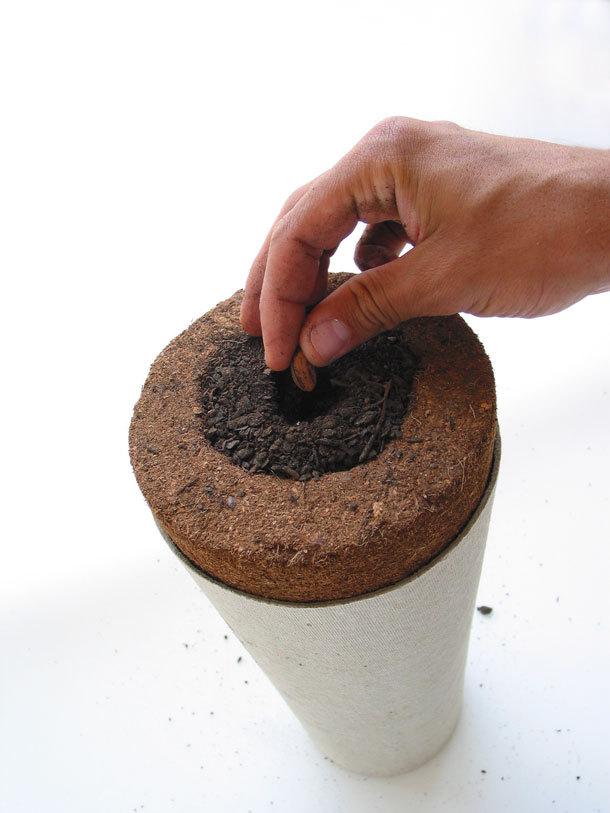 Cette urne funéraire biodégradable fera de vous un arbre après votre décès  Urne310