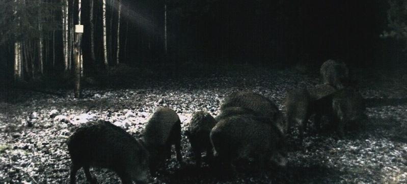 Wildtier-Livecams - Seite 4 Bildsc14