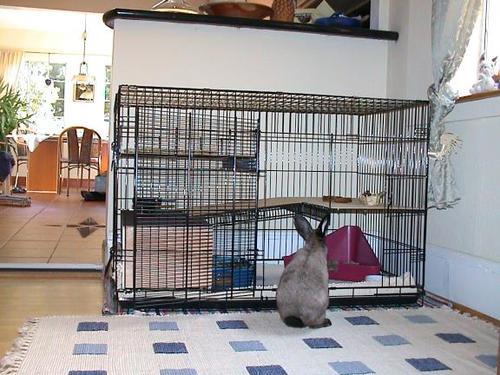 Choix de la cage/caisse de transport - Page 5 119710