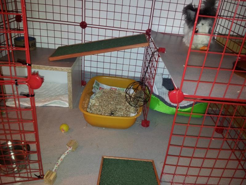 Cavy cage - Habitat lapin & NAC 20140210