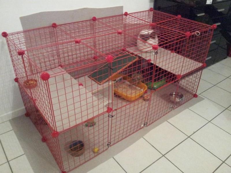 Cavy cage - Habitat lapin & NAC Cavy10