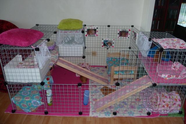 Choix de la cage/caisse de transport - Page 6 P1040810