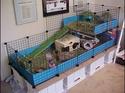Cavy cage - Habitat lapin & NAC Cavy-c10