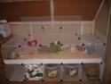 Cavy cage - Habitat lapin & NAC Cavyca10