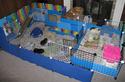 Cavy cage - Habitat lapin & NAC Newcag10
